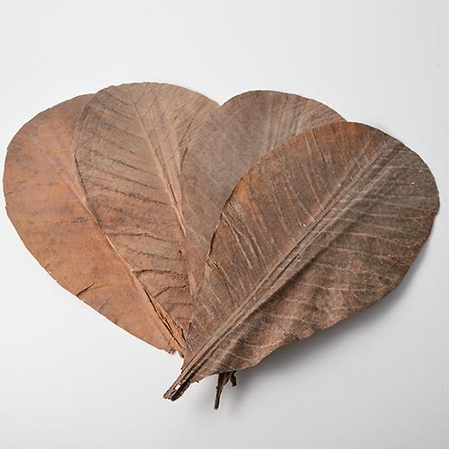 朴の葉(乾燥) / 約20枚
