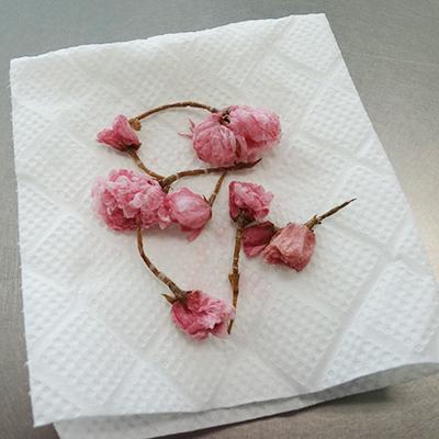 桜花の塩漬の乾かし方